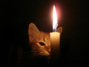 Gato tras la vela