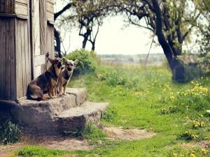Dos perros en el peldaño de una escalera