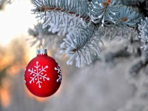 Bola roja de Navidad colgada de la rama de un pino