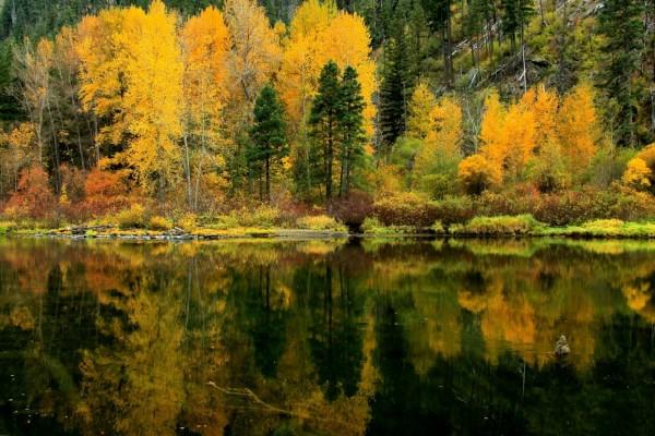 Bosque otoñal reflejado en las aguas del lago