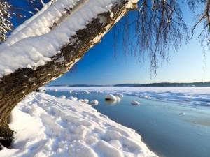 Postal: Nieve a orillas del lago helado