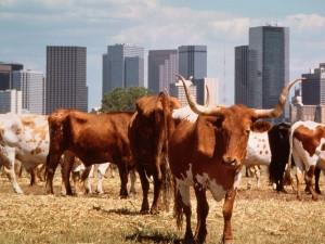 Vacas en la ciudad