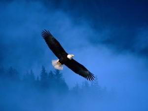 Un águila volando entre la niebla