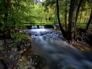 Postal: Un río dentro del bosque