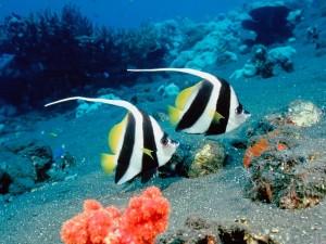 Dos bonitos peces nadando en el fondo del mar