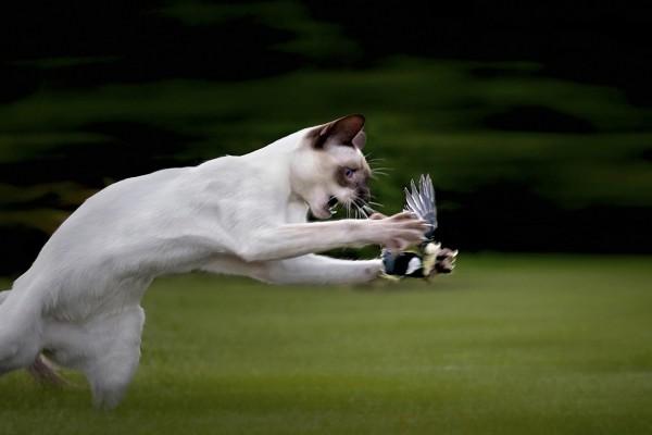 Gato atrapando a un pájaro