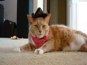 Un gato con pañuelo y sombrero