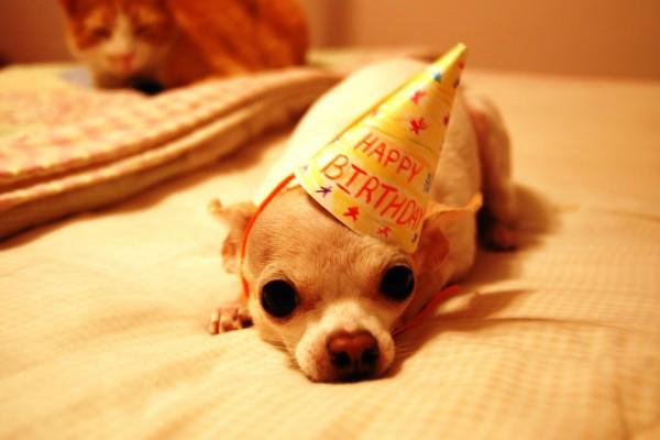 Cumpleaños de un perrito