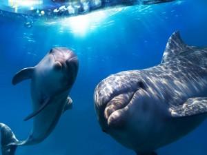 Delfín bebé y su madre bajo el agua