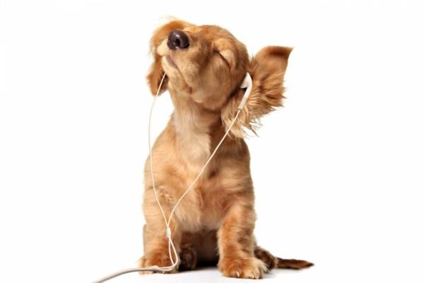 Un perro disfrutando de la música