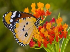Postal: Bella mariposa posada en pequeñas flores