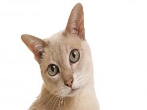 Postal: Un gato con grandes ojos