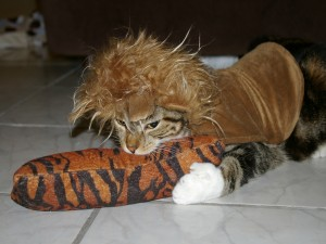 Postal: Gato con un disfraz de león
