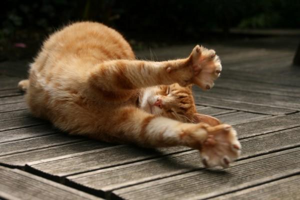 Un gato estirando las patas