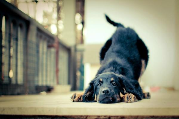 Un bonito perro negro con la cabeza en el suelo