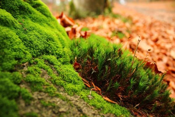 Musgo en otoño