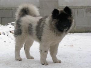 Un bonito perro sobre la nieve