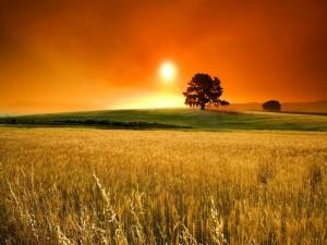 Un bonito cielo naranja sobre el campo