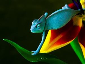 Camaleón caminando sobre una flor