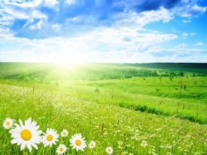 Postal: El sol brillando con intensidad sobre un campo con margaritas