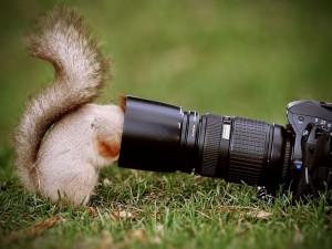 La cabeza de una ardilla dentro del objetivo de una cámara