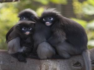 Postal: Tres simpáticos monos