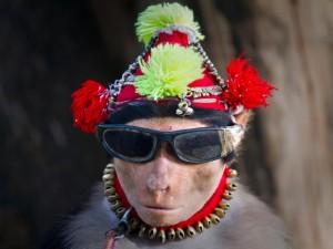 Un mono chistoso con gorro y gafas de sol