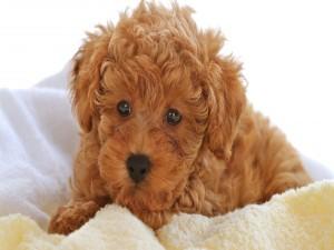 Un bonito perro marrón