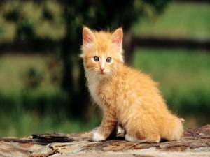 Postal: Un gatito lindo
