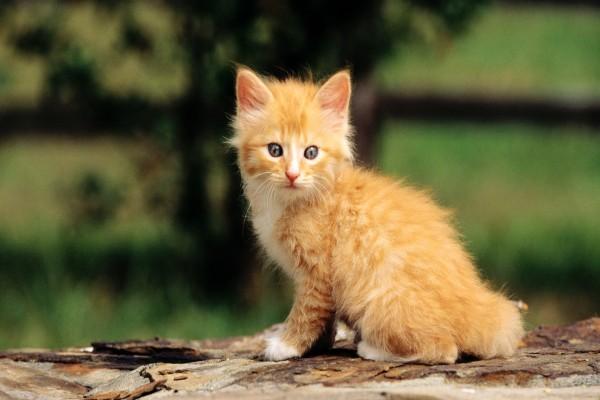 Un gatito lindo