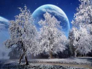 Postal: Árboles helados y un planeta cercano