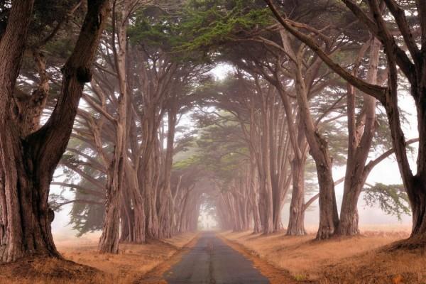 Árboles a orillas del camino
