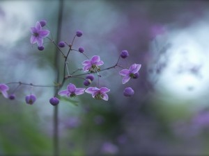Un ramita con hermosas flores color púrpura