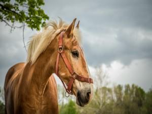 Retrato de un fabuloso caballo