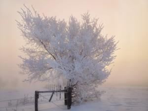 Postal: Árbol en una mañana de invierno