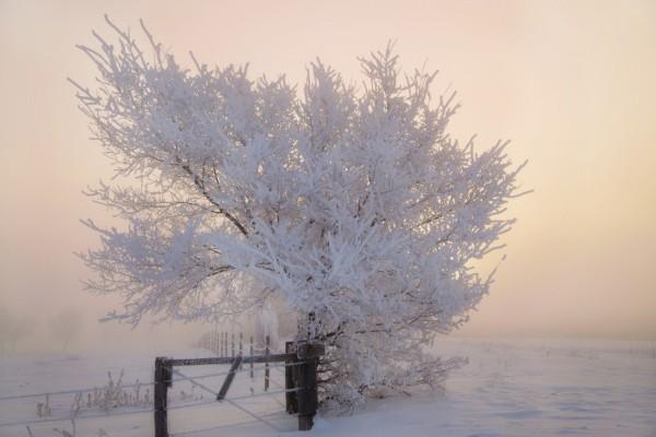 Árbol en una mañana de invierno