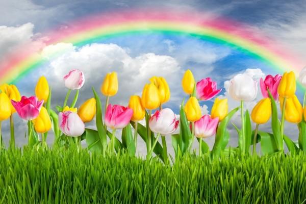 Espléndido arco iris sobre unos tulipanes