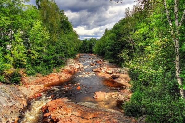 Un estrecho río entre árboles