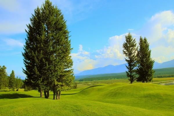 Colinas verdes con árboles