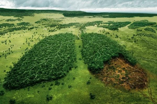 Los pulmones de la naturaleza ¡No los destruyas!