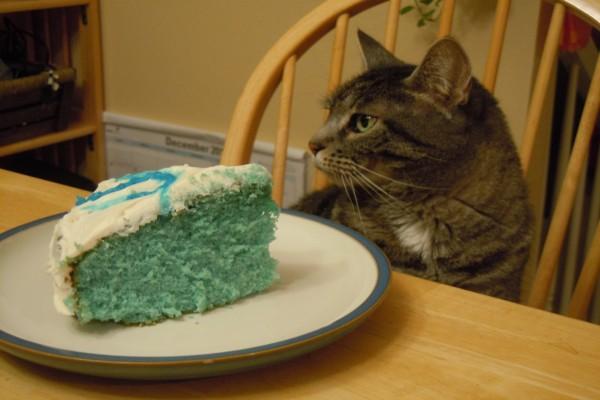Gato junto a un pastel azul