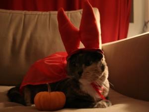 """Postal: Un gato disfrazado para festejar """"Halloween"""""""