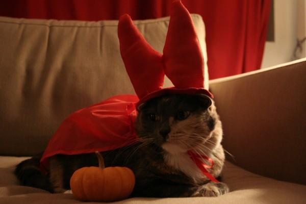 """Un gato disfrazado para festejar """"Halloween"""""""