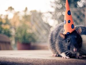 Postal: Una rata con un gorro de fiesta
