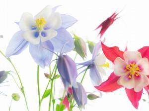 Espléndidas flores en verano