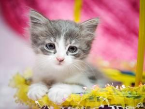 Postal: Un lindo gatito en una cesta