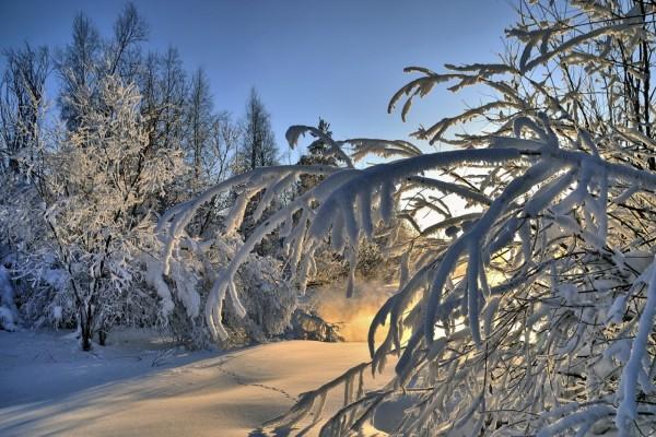 Los tibios rayos del sol penetran entre los árboles cubiertos de nieve