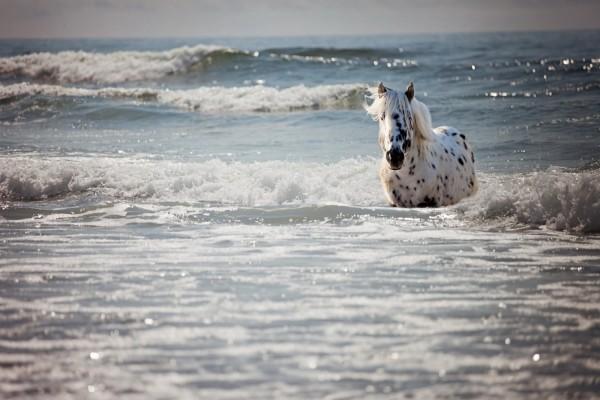 Un bello caballo trotando entre las olas