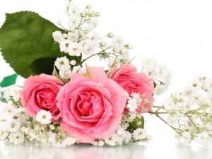 Postal: Pequeño ramo de rosas color rosa