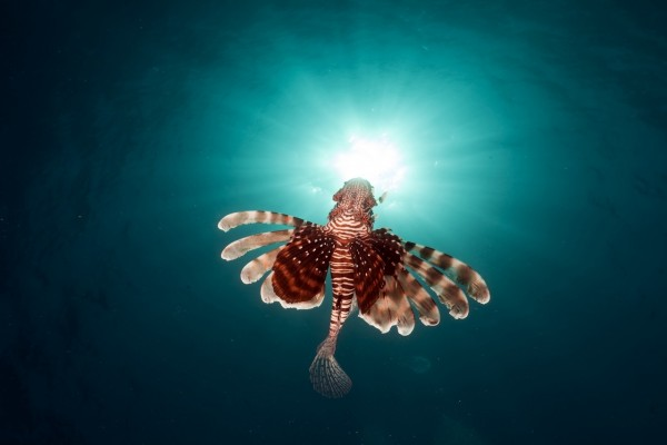 Un vistoso pez bajo el agua